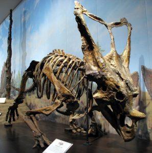 Royal Gorge Dinosaur Experience